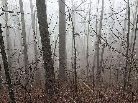 Georgia Fog by William Sullivan