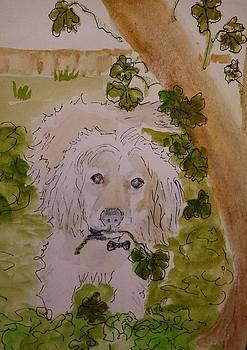 Georgie by Kathy Sweeney