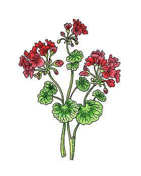 Geranium Flower Watercolor  by Irina Sztukowski