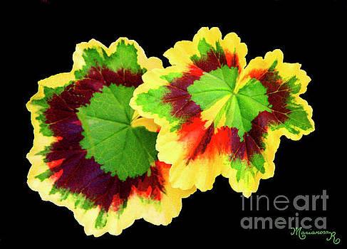 Geranium leaves by Mariarosa Rockefeller