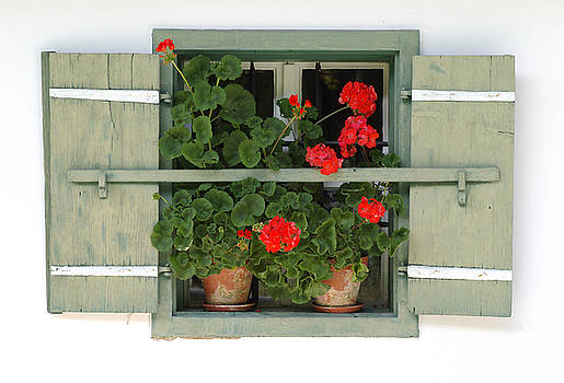 Geranium Window by Frank Tschakert
