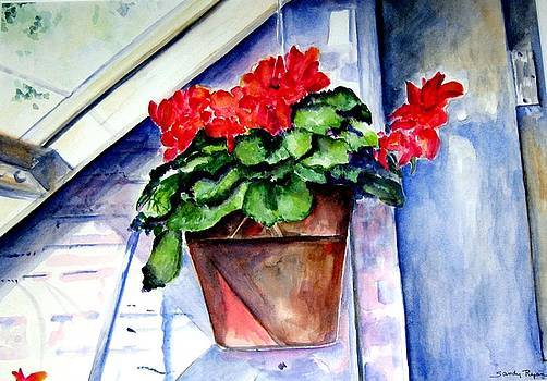Geraniums by Sandy Ryan