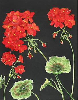 Geraniums by Sue Ervin