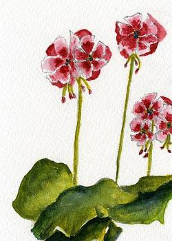Geraniums by Wendy Cunico