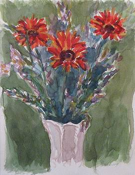 Gerber Daisies by Thom Duffy