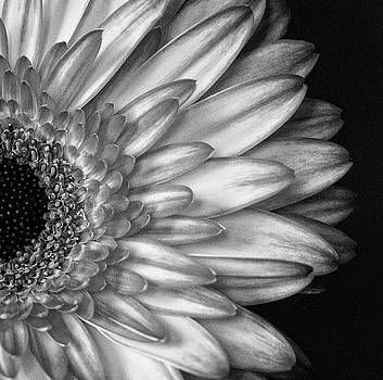 Gerber Daisy Black and White by Garvin Hunter