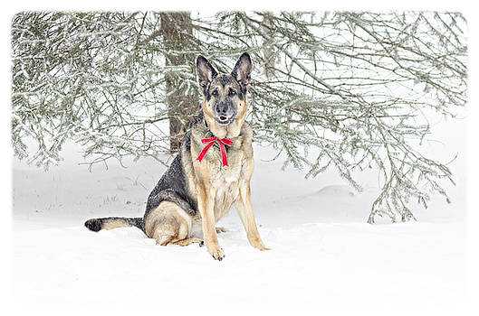 German Shepherd Dog in Snow by Donna Doherty