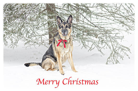 German Shepherd Dog Merry Christmas by Donna Doherty
