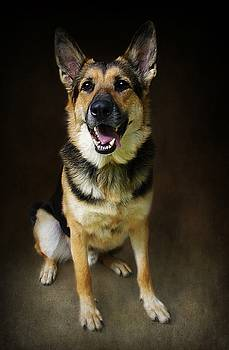 German Shepherd Dog Thor by Stephanie Calhoun