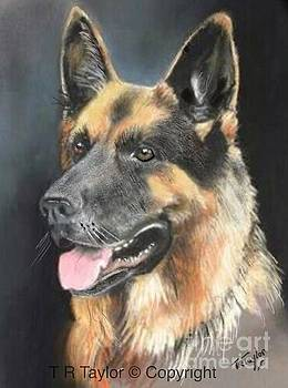 German Shepherd by Ralph Taylor