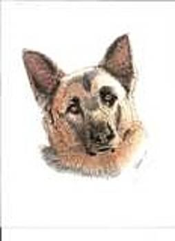 Bill Hubbard - German Shepherd