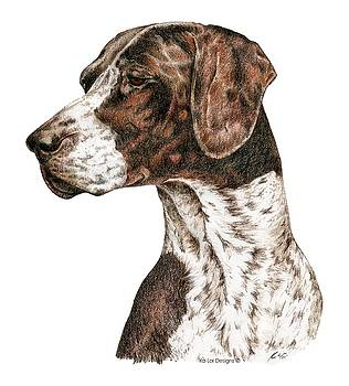 German Shorthaired Pointer by Kathleen Sepulveda