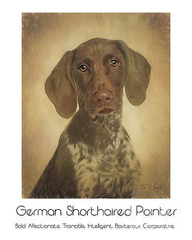 German Shorthaired Pointer Poster by Tim Wemple