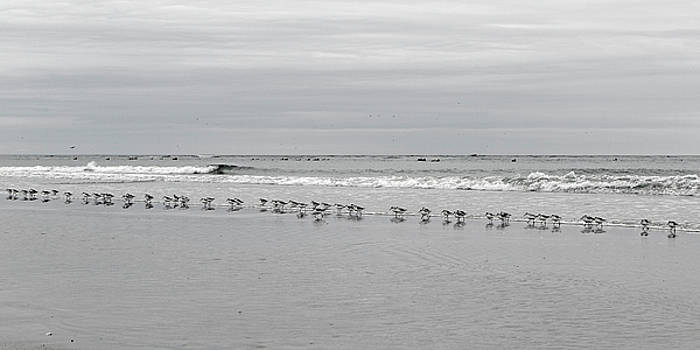 Get Your Ducks in a Row by Betsy Knapp