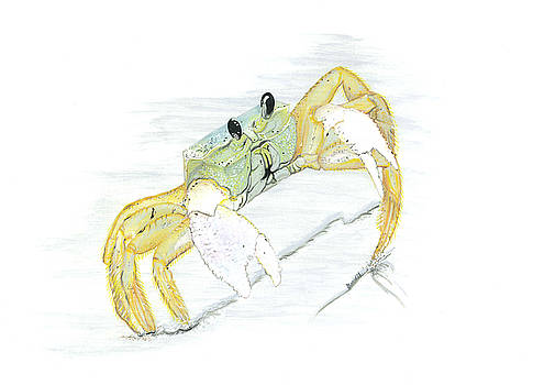 Ghost Crab drawing the line by Jason Girard