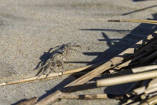 Ghost Crab Eyes the Debris by Liza Eckardt