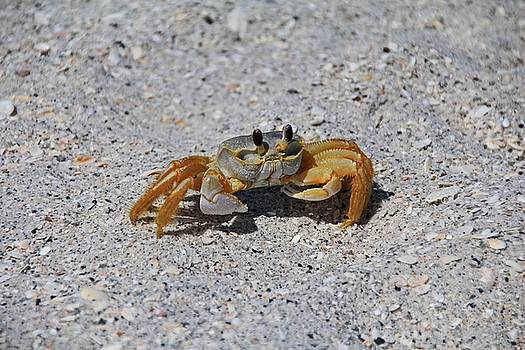 Ghost Crab by Michiale Schneider