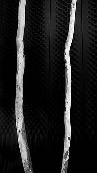 Steven Ralser - Ghost Gums - Canberra -Australia