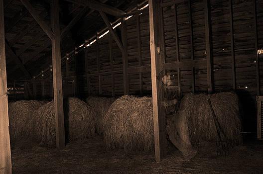 Ghost in the barn by Mandy Wiltzius