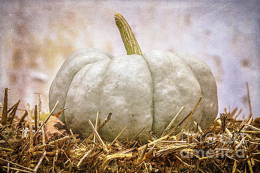 Ghost Pumpkin by Eleanor Abramson