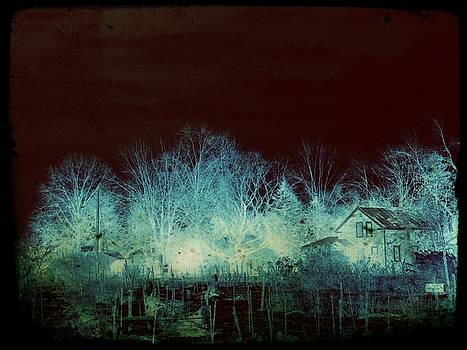 Ghost Trees by Grant Marchand