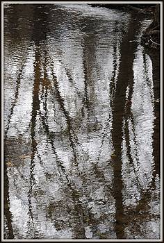 Ghost Trees by Jon Benson