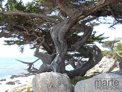 Ghost Trees of Carmel by Marte Thompson