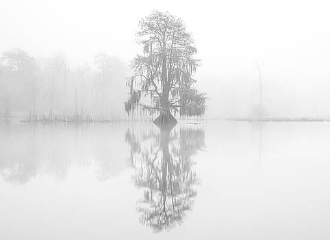 Ghosts in the mist by Andy Crawford