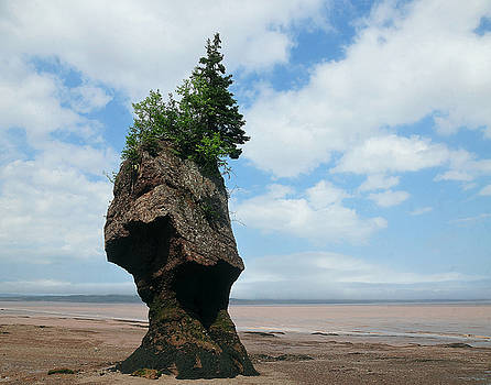 Giant at Fundy Bay by Joyce DeMeester