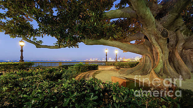 Giant Ficus Alameda Apodaca Blue Hour Cadiz Spain by Pablo Avanzini