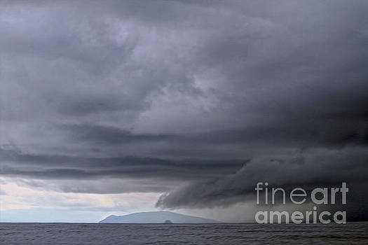 Giant Galapagos Storm by Catherine Sherman