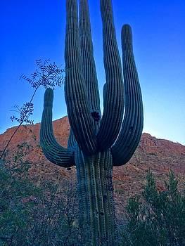 Giant of the Desert  by Heidi Moss