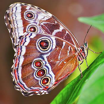 Giant Owl Butterfly by Winnie Chrzanowski