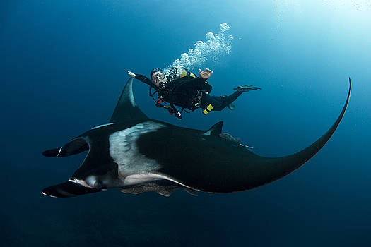 Giant Pacific Manta by David Valencia