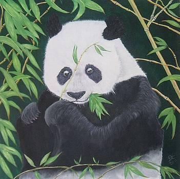 Giant Panda by Alan Wilkinson