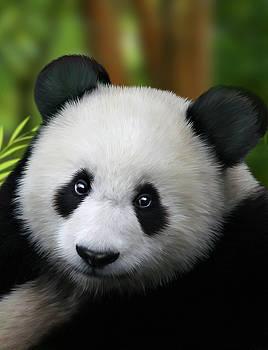 Julie L Hoddinott - Giant Panda
