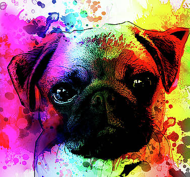 Giant Pug Watercolor Print  by Robert R Splashy Art Abstract Paintings
