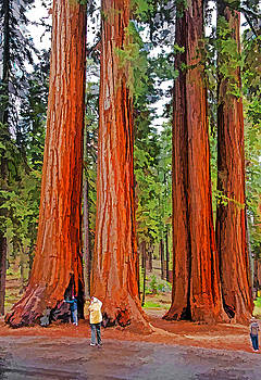 Dennis Cox - Giant Sequoias