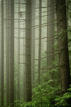 Giants in the mist by Artisanal Photo