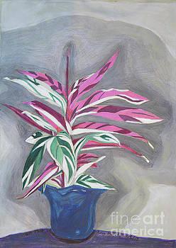 Gift Plant by Cora Eklund