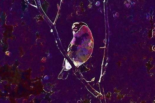 Gimpel Pyrrhula Pyrrhula Blood Fink  by PixBreak Art