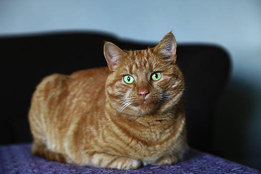 Ginger Marmalade Cat by Nareeta Martin