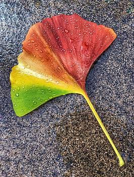 Ginkgo Leaf by Sharon Joubert