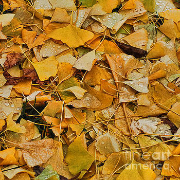 Ginko Leaves Cover Your Bed by Michael Flood