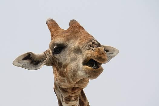 Girafe by Check Check