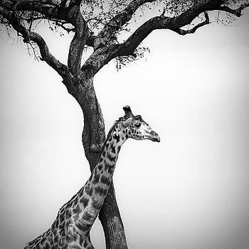 Giraffe And A Tree by Konstantin Kalishko
