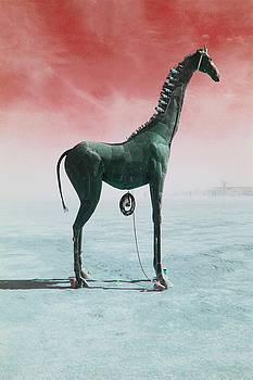 Giraffe at Eventide by Barbara McCarthy