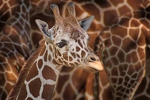 Nikolyn McDonald - Giraffe - Camouflage