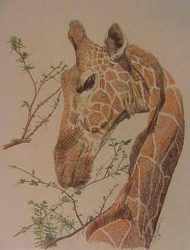 Giraffe by Dan Hausel