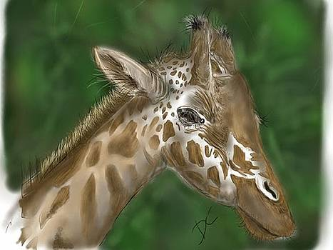 Giraffe by Darren Cannell
